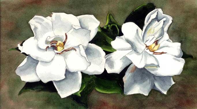 GardeniasIIL