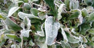 helada-cultivo-ljandreoni_0